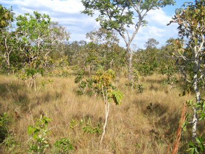 Cerrado: The Tropical Savannas of Brazil